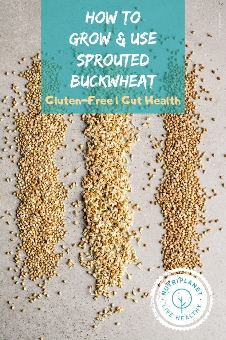 How to grow and use sprouted buckwheat